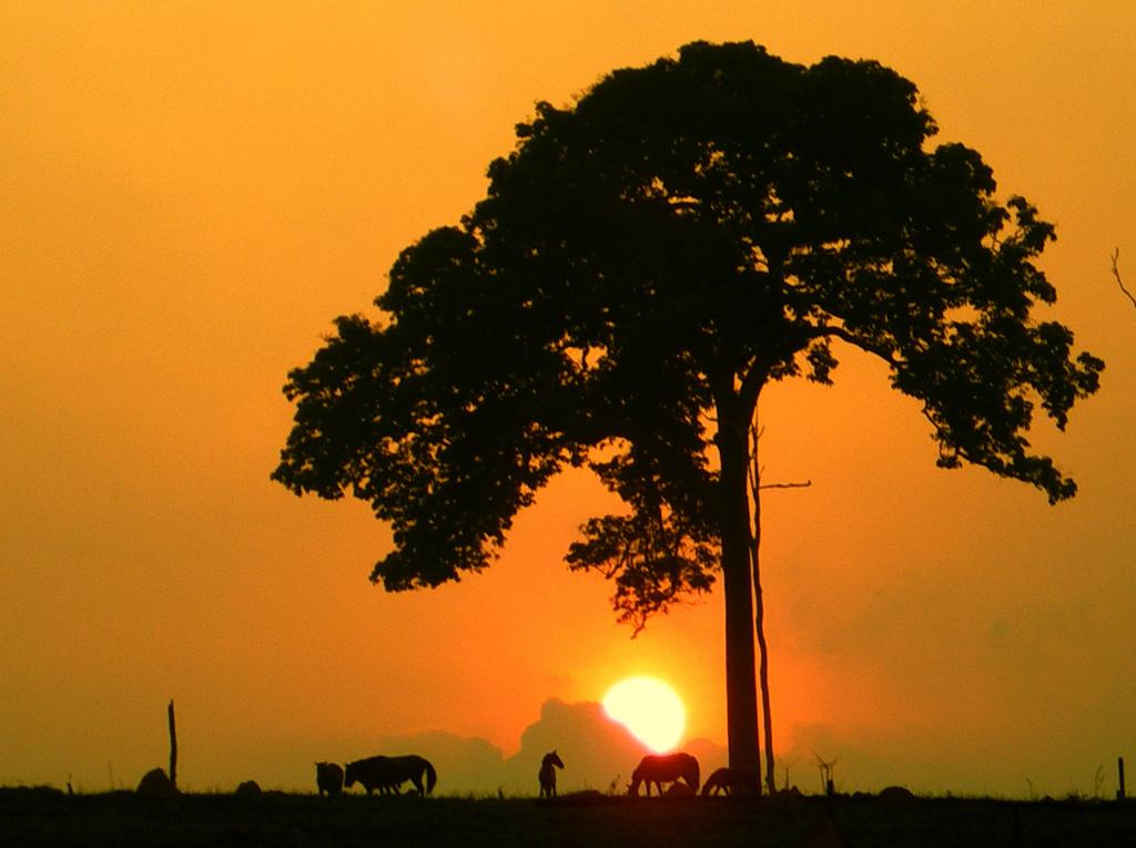 amanhecer-amazonia-castanheira