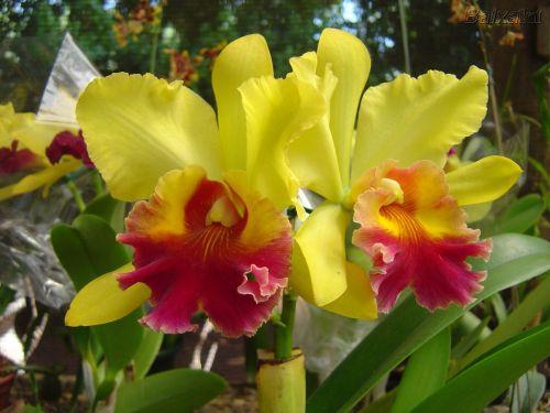 orquideas_004